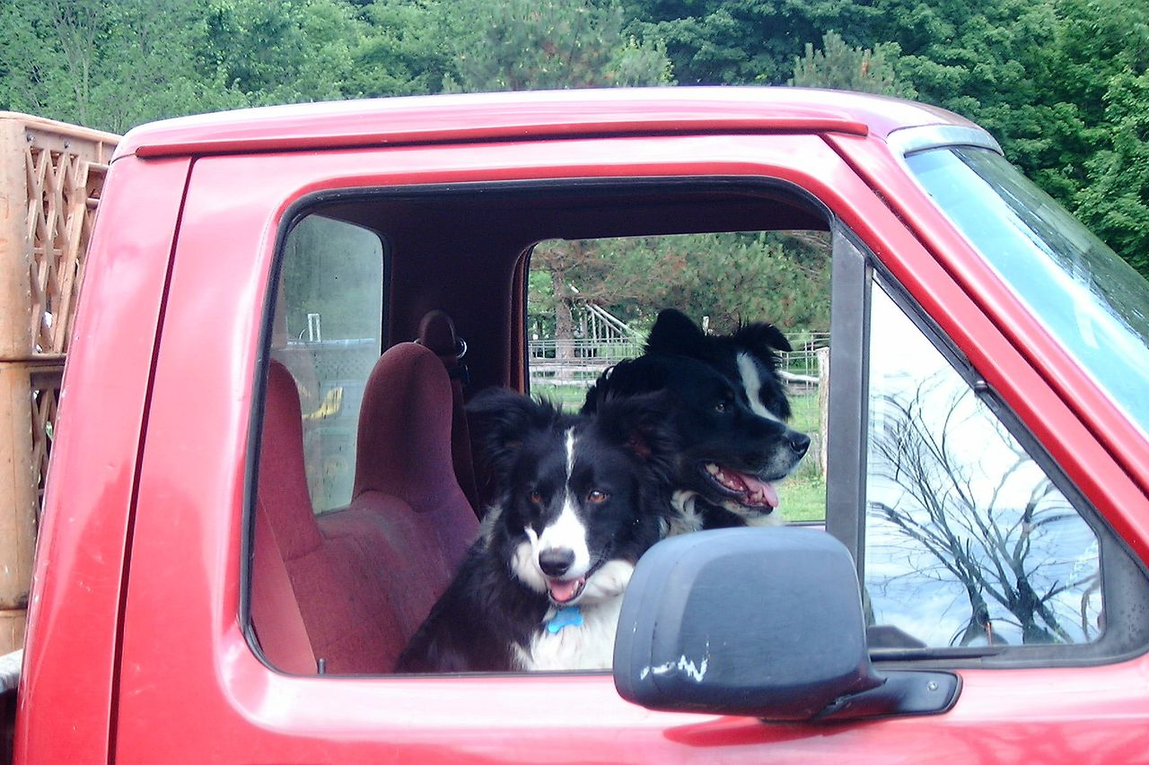 Sap Bush Hollow Farm dogs