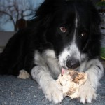 shannon hayes dog with bone
